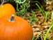 To-Do List for the Fall Garden   Garden Ideas by Team Pendley   Scoop.it