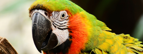 Macaw, the Web design tool for programmers, hits Kickstarter. Here's an overview of why it's different | All Things Web Design! | Scoop.it