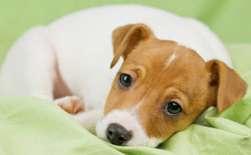 Puppy Set on Fire Inspires New Law in New York | Nature Animals humankind | Scoop.it