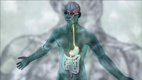 Psychologie cognitive et Neurosciences: Arte - Le ventre, notre deuxième cerveau | Chair Corps | Scoop.it