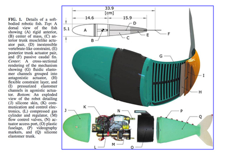 A robot fish that could alter your image of robots forever | Post-Sapiens, les êtres technologiques | Scoop.it