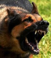 Dog Bites - Do You Know the Signs?   Dog Care Guide   Scoop.it
