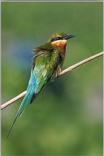 Avian in Indian Bird Sanctuaries   List of bird sanctuaries in India   Scoop.it