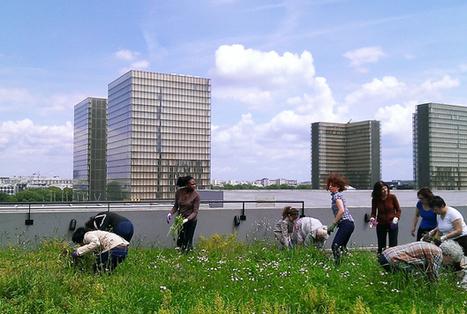 Paris à toits ouverts | Décisions durables | Innovations urbaines | Scoop.it
