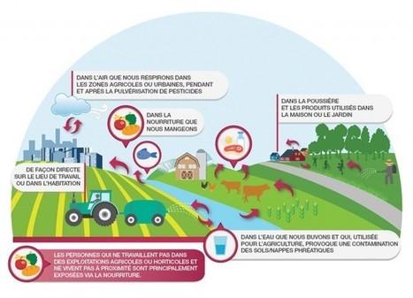 Pesticides : c'est notre santé qui est en jeu ! | Toxique, soyons vigilant ! | Scoop.it