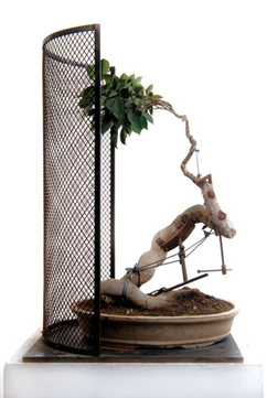Shen Shaomin: Bonsai | Art Installations, Sculpture, Contemporary Art | Scoop.it