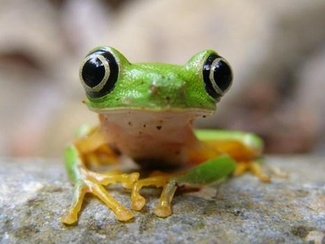América Latina: lecciones globales en protección de la biodiversidad [Video]   la evolución de los organismos   Scoop.it