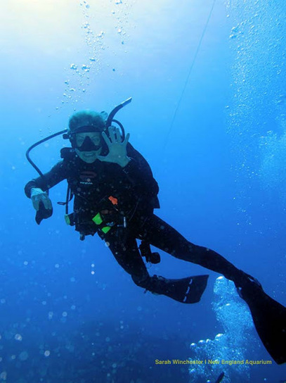 Giant Ocean Tank Divers and Expeditions Blog: Day 8: Move 'em out | Marine Biology | Scoop.it