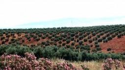 El cultivo ecológico III: El plan de fertilización | El Catador de Aceite | Mundo Agroalimentario | Scoop.it