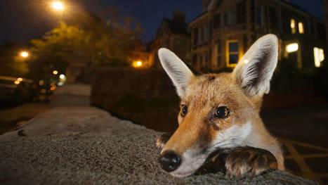 #Fotos: Las mejores imágenes de #naturaleza de #2016 | Reflejos | Scoop.it