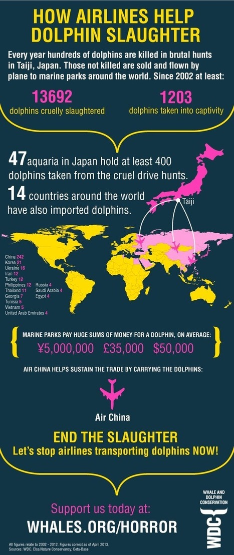 Tell airlines to stop transporting dolphins to marine parks | Nature Animals humankind | Scoop.it