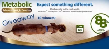 Cat Wisdom 101 | Fat Cats Aren't Funny & #Hillspet #Giveaway | Cats | Scoop.it