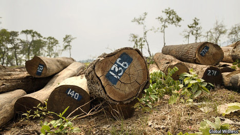 Rubber barons: the destruction of forests continues   Timberland Investment   Scoop.it
