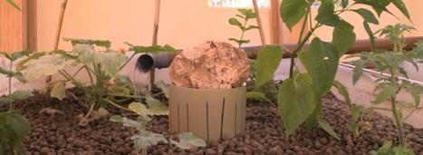 L'aquaponie facilite l'implantation de fermes urbaines | Développeur économique | Scoop.it