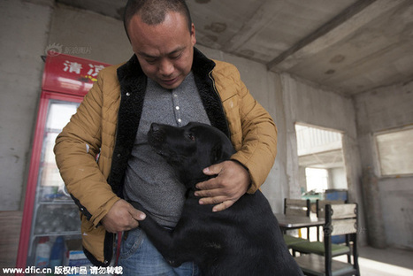 Former Chinese Millionaire Spends Fortune Saving China's Forgotten Dogs | This Gives Me Hope | Scoop.it