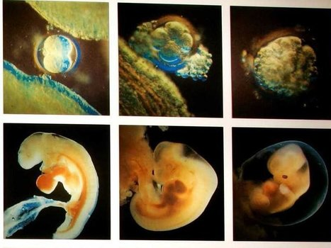 For the first time in history, a government has approved genetically editing human embryos | Chair et Métal - L'Humanité augmentée | Scoop.it