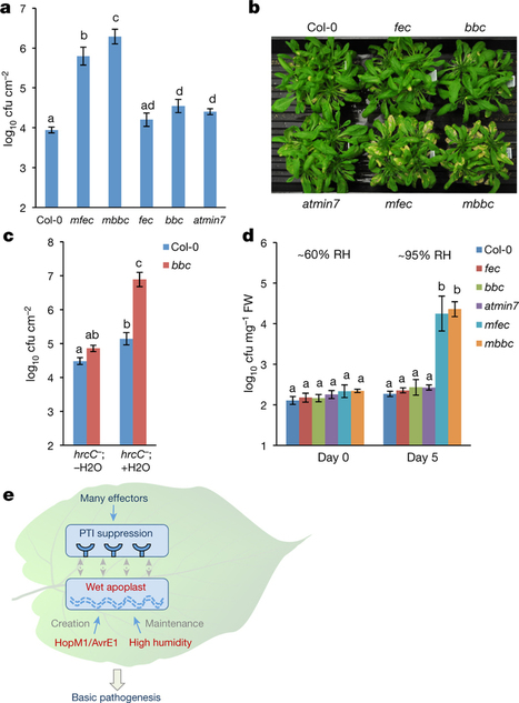 Disease reconstitution experiments. : Bacteria establish an aqueous living space in plants crucial for virulence : Nature : Nature Research   lignocellulosic biomass   Scoop.it