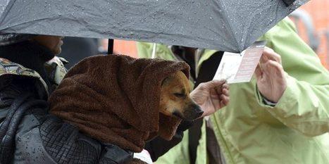 Des conseils pour les propriétaires de chien - 20 minutes.ch   chiens shetland   Scoop.it