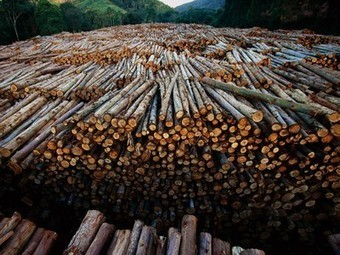Rio's Rain Forest, Brazil, Deforestation, Urbanization - National Geographic | Rio de Janeiro | Scoop.it