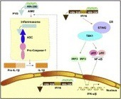 DNA-responsive inflammasomes and their regulators in autoimmunity 10.1016/j.clim.2011.12.007 : Clinical Immunology   ScienceDirect.com   Virology and Bioinformatics from Virology.ca   Scoop.it