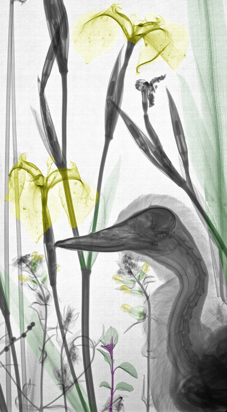 Arie van't Riet's X-ray Photography Examines Nature | Hi-Fructose Magazine | Intelligence | Scoop.it