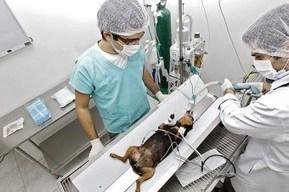 O primeiro hospital veterinário público em São Paulo | Meio ambiente | Scoop.it