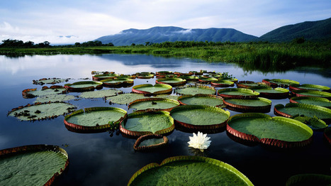 La Selva Amazónica en Peligro por la Explotación Petrolera - ElBlogVerde.com | Agua | Scoop.it