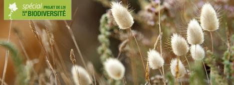 Ce que contient la nouvelle loi sur la biodiversité | Planete DDurable | Scoop.it
