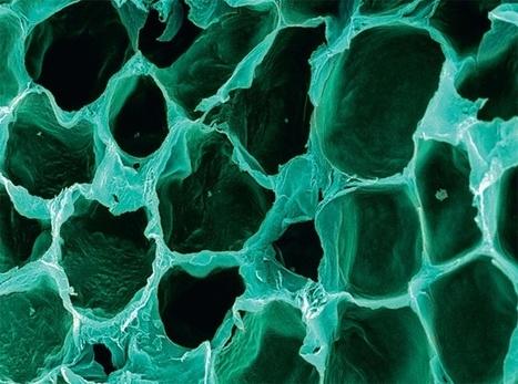 The Human Body Under the Microscope | DiscoverMagazine.com | Banco de Aulas | Scoop.it