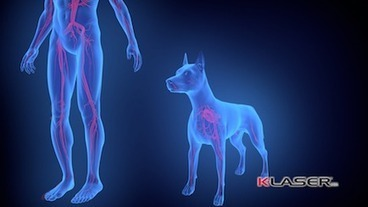 How It Works: Laser Therapy De-Mystified | K-LaserUSA | Veterinarian Laser Treatments and Therapy | Scoop.it