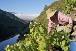 Las existencias de vino desbordan las bodegas pese a las exportaciones | Gestión administrativa y financiera del comercio internacional | Scoop.it
