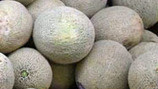 Cantaloupe processor largely ignored FDA guidelines, probe finds | Food issues | Scoop.it