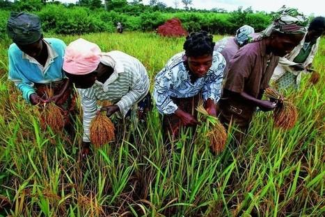 Comment voyez-vous l'agriculture dans 5, 10 ou 20 ans ? À quoi ressembleront les moissons du futur? | Agriculture | Scoop.it