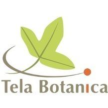 MOOC Botanique | biodiversité en milieu urbain | Scoop.it