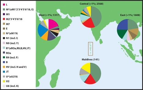 Indian ocean crossroads: Human genetic origin and population structure in the maldives - Pijpe et al. | Indian Ocean Archaeology | Scoop.it