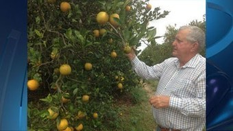 Florida citrus growers predicting worst crop on record - WFLA | Citrus Science | Scoop.it