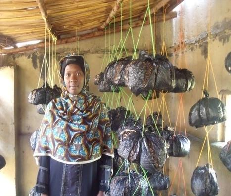 Uganda: reported in their own word NAMUGOSA AMINAH – Mushroom Growing | Mushroom cultivation in The Third World | Scoop.it