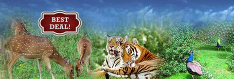 Wildlife tours India | Tiger safari India | Wildlife of India - T2INDIA | Travel to India ,Nepal & Bhutan - T2india.us | Scoop.it