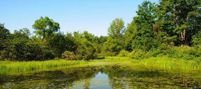 Wetlands Vital in Supporting Human Life and Bio...