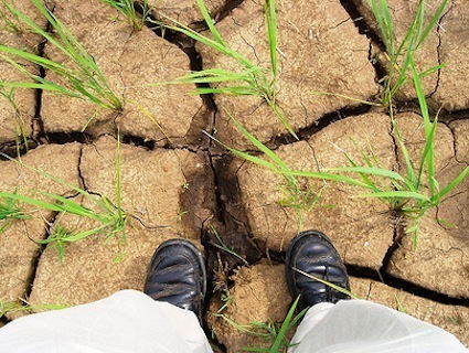 Climate Change Is Already Shrinking Crop Yields | GMO GM Articles Research Links | Scoop.it