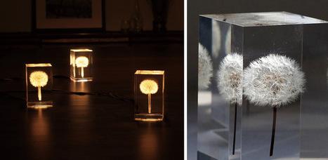 OLED Dandelion Lights by Takao Inoue #art #dandelions #lights #acrylic #sculpture #nature | Luby Art | Scoop.it