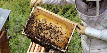 Prochaine création d'une école de formation en apiculture à Sétif - Sétif.info | bourgogne nature | Scoop.it