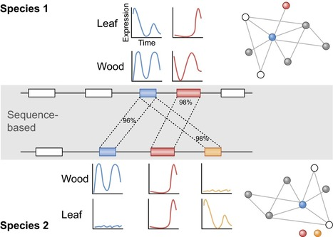 Towards integration of population and comparative genomics in forest trees | MycorWeb Plant-Microbe Interactions | Scoop.it