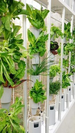 The Windowfarms™ Store | Vertical Farm - Food Factory | Scoop.it
