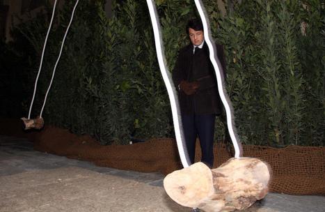 Giardino Sonoro - Loggia del Grano - Stefano Passerotti   DESARTSONNANTS - CRÉATION SONORE ET ENVIRONNEMENT - ENVIRONMENTAL SOUND ART - PAYSAGES ET ECOLOGIE SONORE   Scoop.it