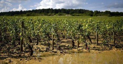 Après la grêle, la désolation des viticulteurs de la côte de Beaune | Le vin quotidien | Scoop.it