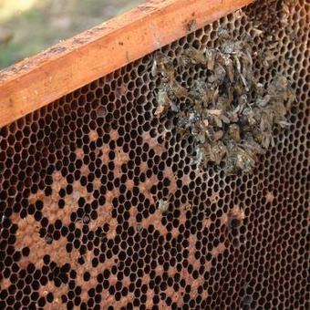 Hensies : il perd un million 750.000 abeilles en 30 minutes | ALTERAPI | Scoop.it