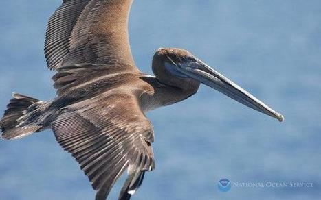 #Seabirds can help track #OceanPollution - NBCNews.com (blog) 'regulations sparse' who manufacture! | Rescue our Ocean's & it's species from Man's Pollution! | Scoop.it