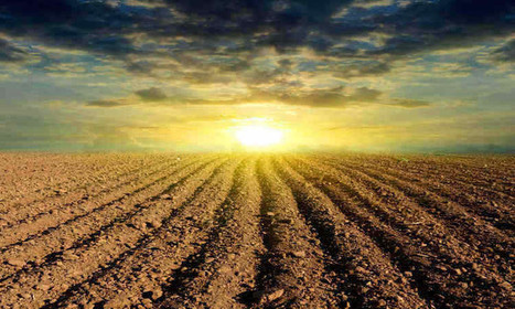 Dirt in Danger: How Soil Around the World is Threatened | sustainability and resilience | Scoop.it
