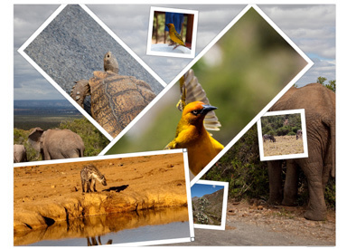 PHOTO COLLAGE - Create online photo collages, photo animations and photo slideshows | ICT Resources for Teachers | Scoop.it